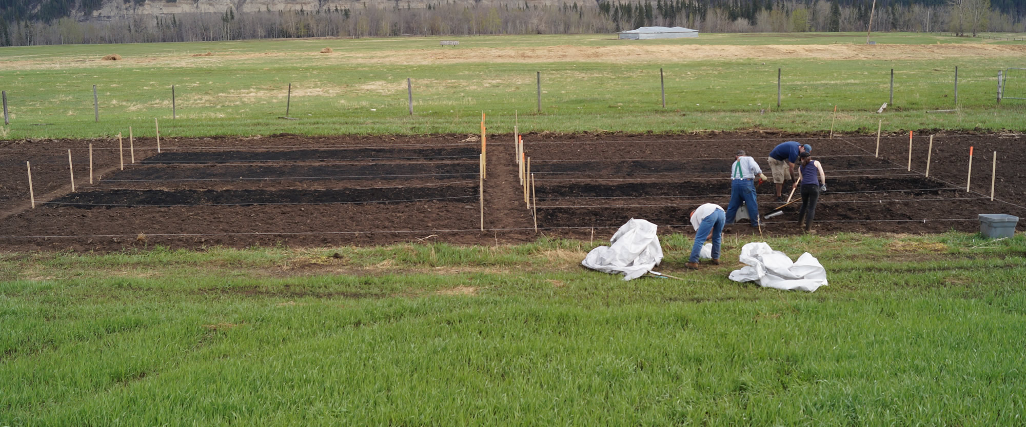 The biochar being applied to the field prior to incorporation and seeding.