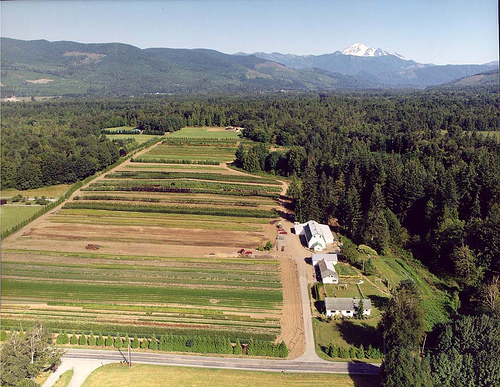 Aerial View of Fourth Corner Nurseries
