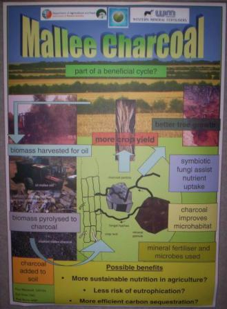 Mallee charcoal