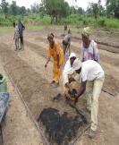 Super Vegetable Garden field Application